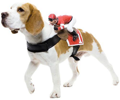 Halloween: disfraces para mascotas