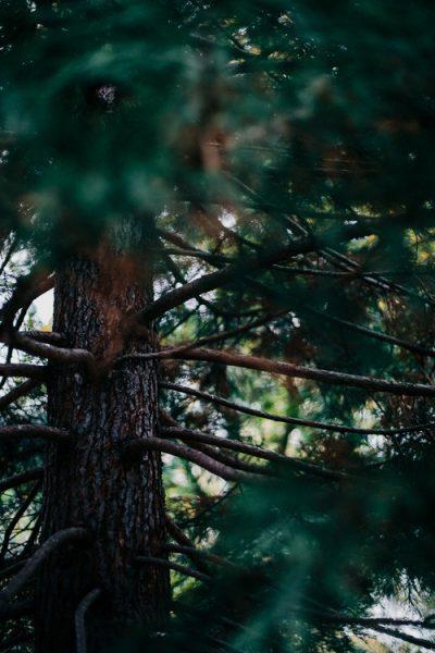 Corona de cobre y ramitas para Navidad pinos