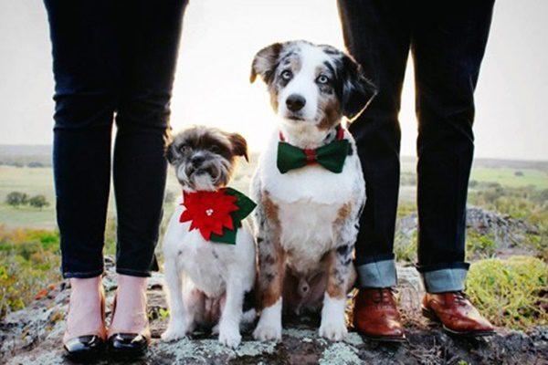 fotos-de-las-mascotas-para-felicitar-las-navidades-1-500x333