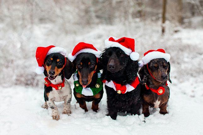 Felicitar la Navidad con tu Mascota