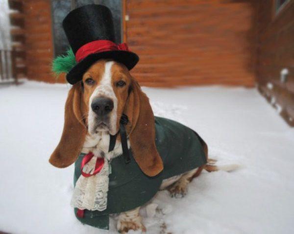 fotos-de-las-mascotas-para-felicitar-las-navidades-13-500x398
