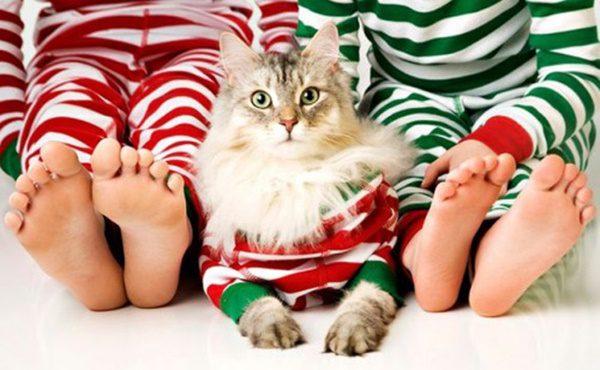 fotos-de-las-mascotas-para-felicitar-las-navidades-14-500x308