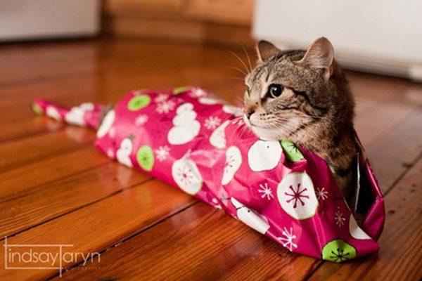 fotos-de-las-mascotas-para-felicitar-las-navidades-6-500x333