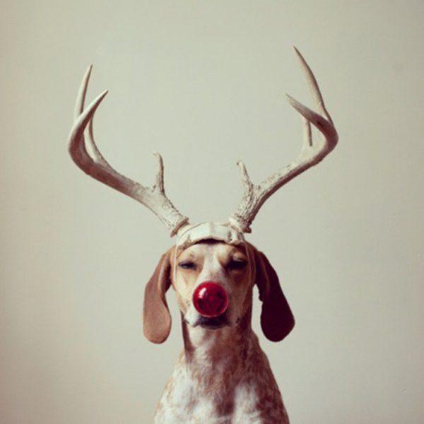fotos-de-las-mascotas-para-felicitar-las-navidades-9-500x500