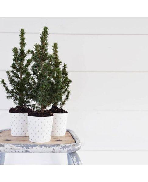 Carula decora tu fiesta de Navidad