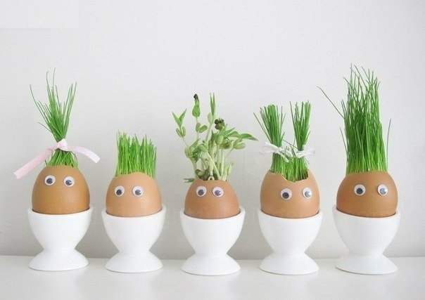 Macetas para Plantas Hechas con Huevos
