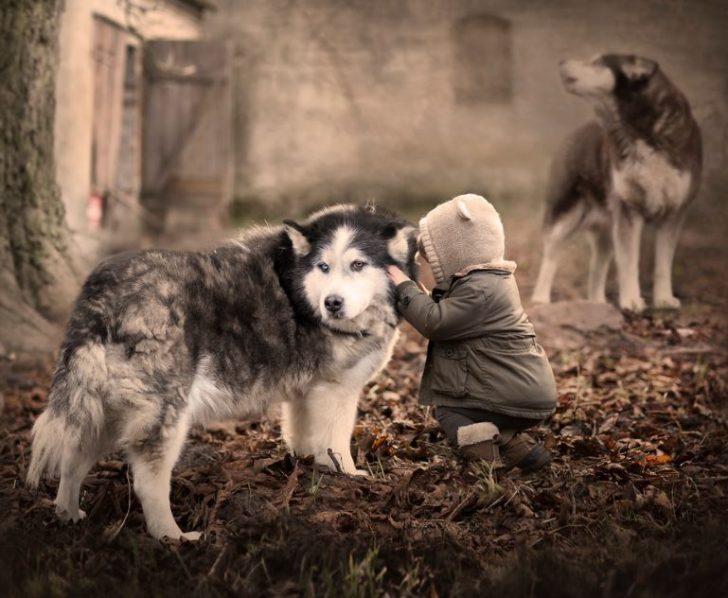 fotos de niños con perros lobos